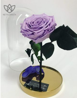 FLOWERDOME   GOLD EDITION   HIMALAYAN LILAC