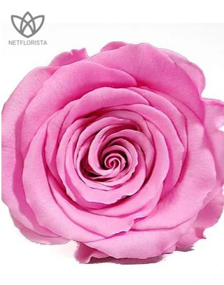 Forever Quadrata - small black cube box - pink and white infinity roses-1