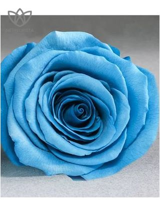 Forever Piccolo - small white round box - aqua blue infinity roses-2