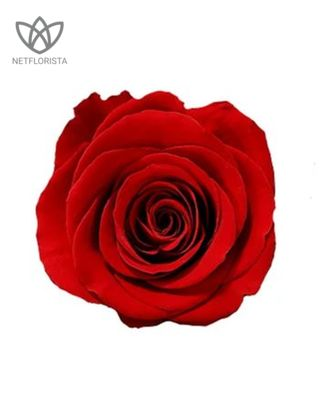 Forever Medio - medium white round box - red infinity roses-2