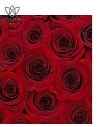 Forever Medio - medium white round box - red infinity roses-3