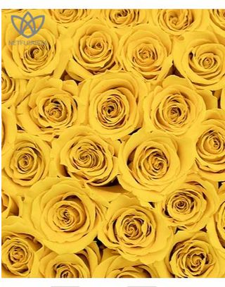 Forever Medio - medium white round box - yellow infinity roses-1