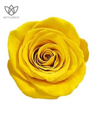 Forever Medio - medium white round box - yellow infinity roses-2
