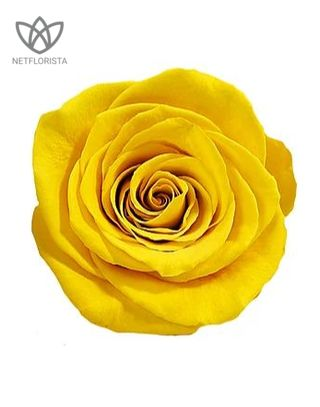 Forever Medio - medium black round box - yellow infinity roses-1