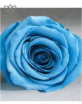 Forever Medio - medium white round box - light blue infinity roses-2