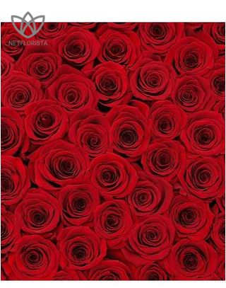 Forever Grande - large white or black round box - red infinity roses