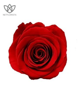 Forever Grande - large white or black round box - red infinity roses-2