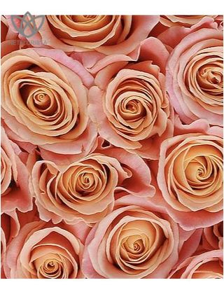 Quadrata - small black square box - peach roses-1