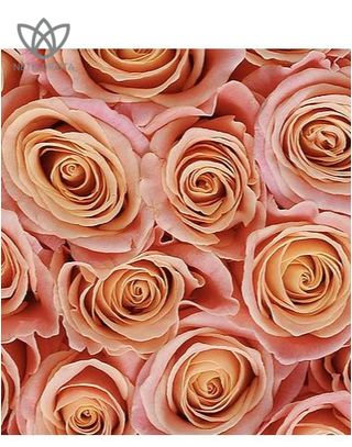 Quadrata - small white square box - peach roses-1