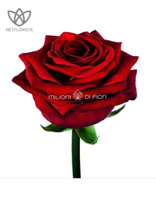 Red rose bouquet - 20 stem-0