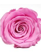 Forever Quadrata - small black cube box - pink and white infinity roses