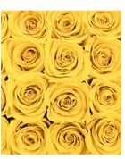 Forever Quadrata - small white cube box - yellow infinity roses