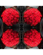 100 stems - Red rose bouquet